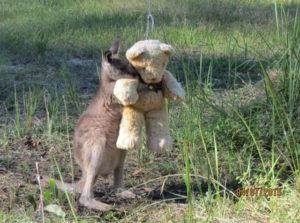 Kangaroo-Hug-teddy